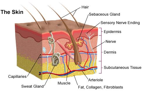 Skin Care Portland Dermatologists
